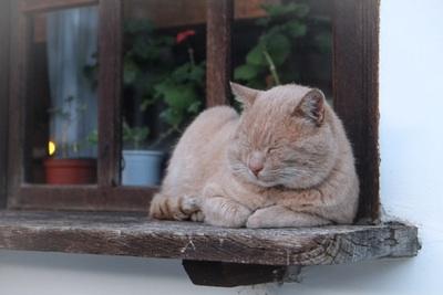 不眠症の基準
