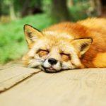 つい寝すぎてしまう…過眠してしまう人に潜む恐ろしい病気とは