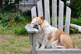 ナルコレプシーと突発性過眠症の違いと特徴