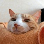 寝るときの「考え事」で眠れなくなる!睡眠を妨げる入眠前思考とは